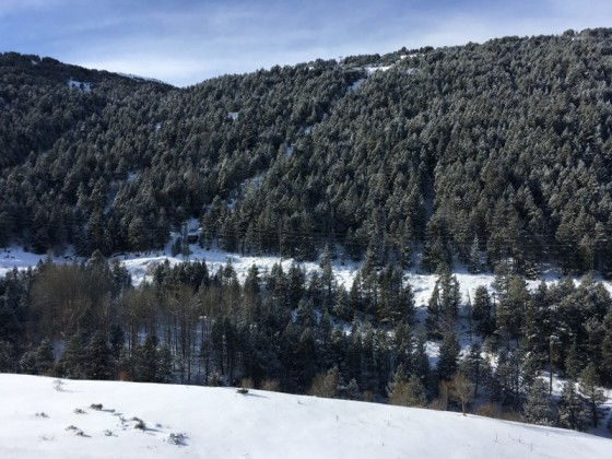 The forests on the road to Grau Roig covered in snow