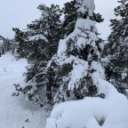 Snow covered trees from Xavi chairlift