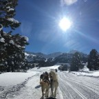 Perfect day for Mushing matched with beautiful scenery!