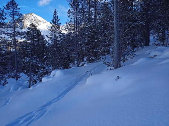 Over 40 cm of snow coverage in Grau Roig