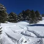 Fresh tracks through the trees