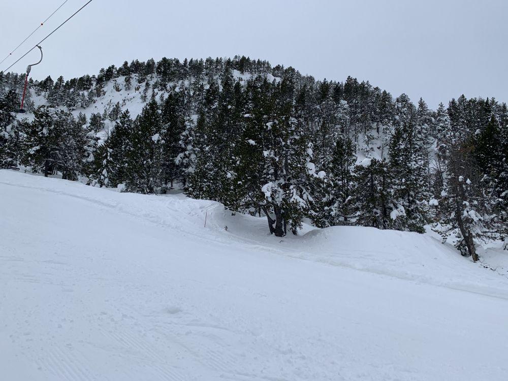 Trees beside the Montmalus drag lift
