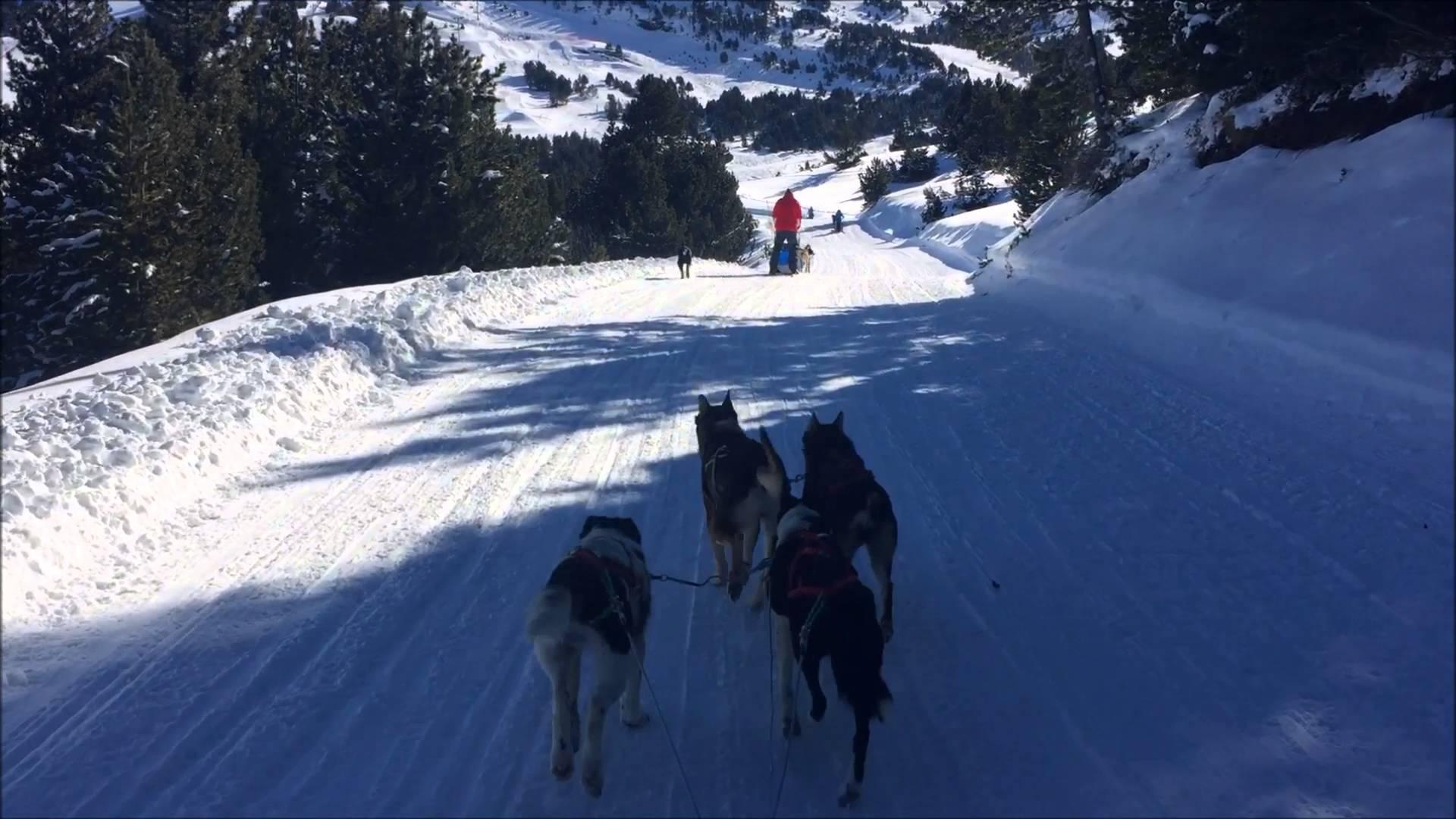 Dog Sledding in El Tarter, January 2016
